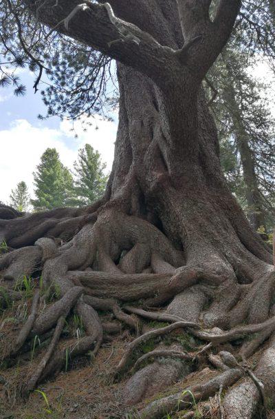 alberi particolari